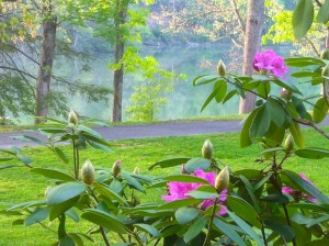 Rhododendron, trails, mountains, lakes, and the CCC history are striking resources at Hungry Mother State Park.